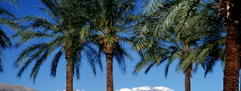 Palm Springs offers blue skies, palm trees, and snow-capped mountains. Photo courtesy of visitpalmsprings.com